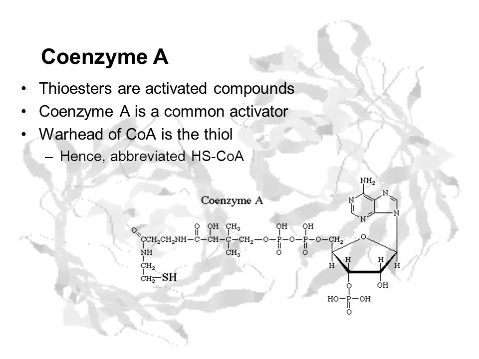 Coenzyme A Thioesters are activated compounds