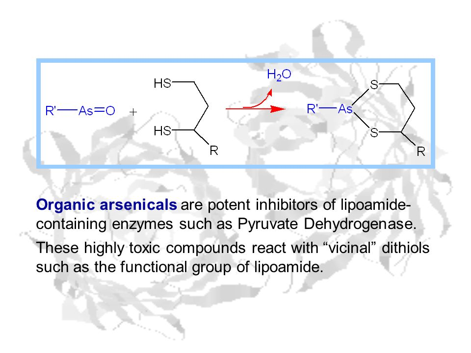 Organic arsenicals are potent inhibitors of lipoamide-containing enzymes such as Pyruvate Dehydrogenase.
