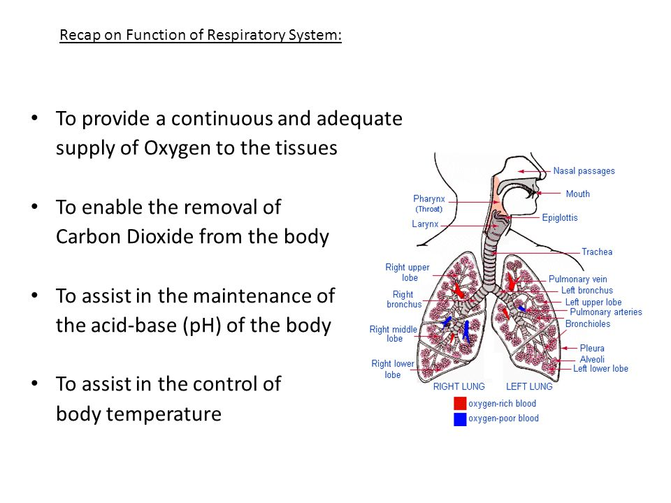 Respiratory Function During Exercise