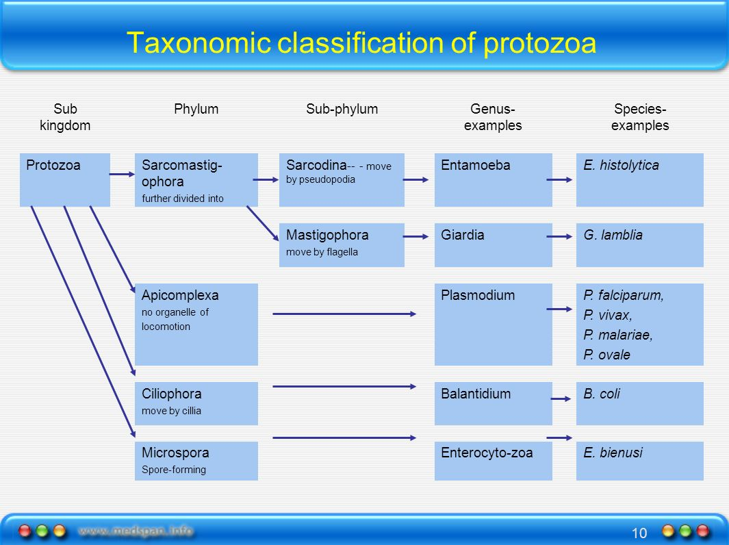 Taxonomic classification of protozoa