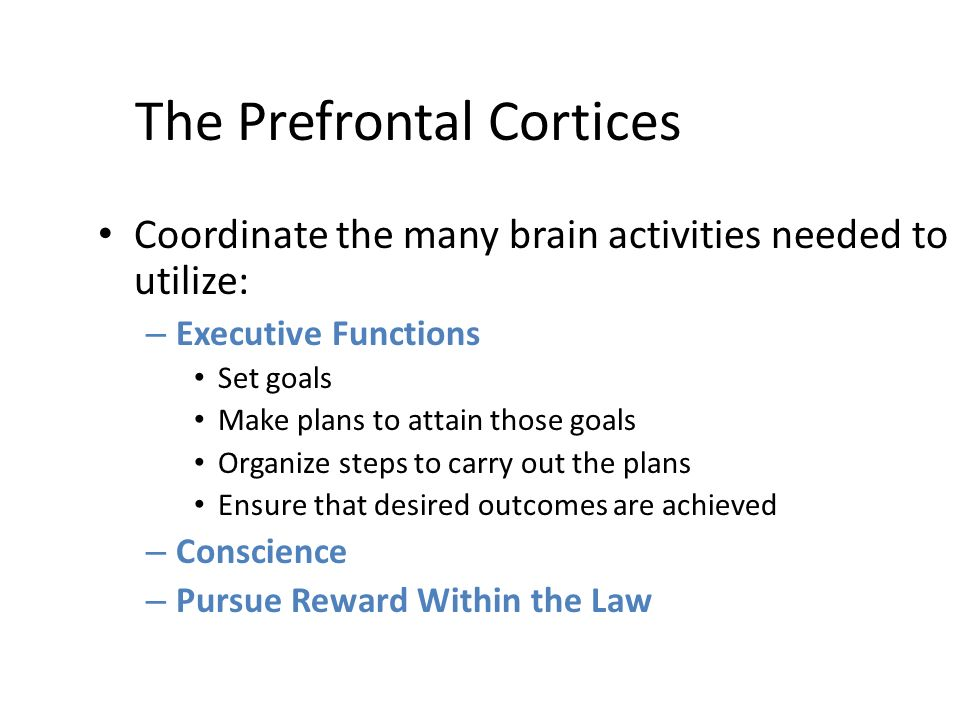 The Prefrontal Cortices