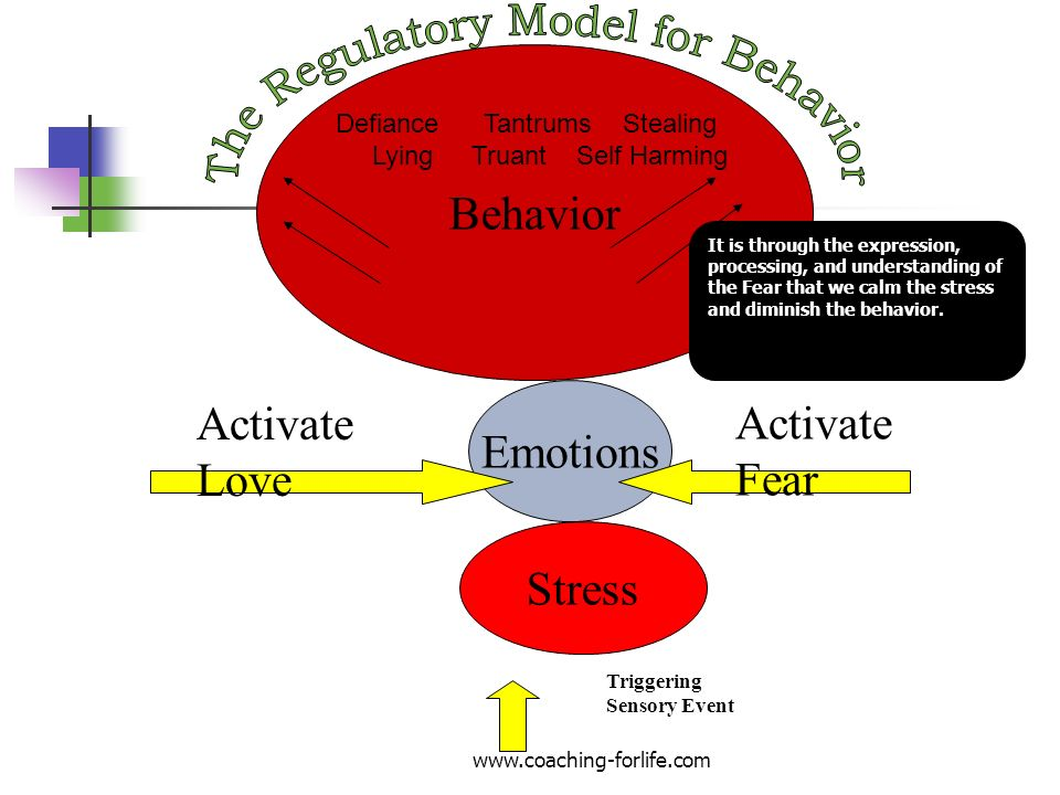 The Regulatory Model for Behavior