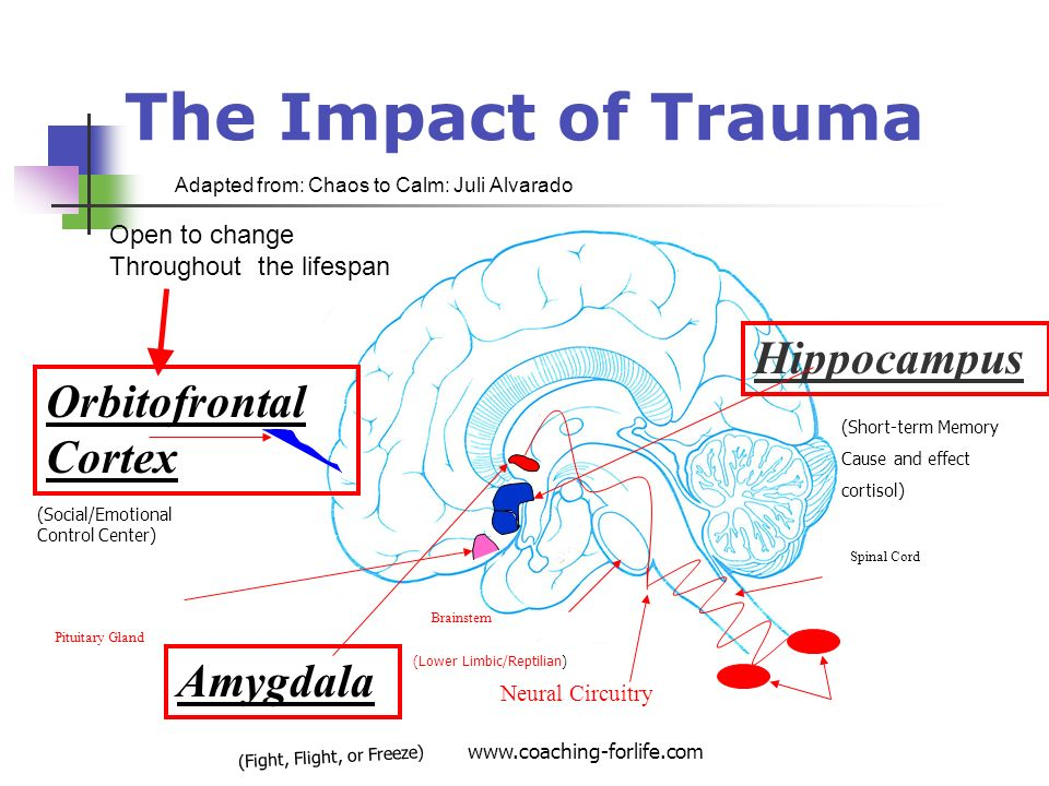 The Impact of Trauma Hippocampus Orbitofrontal Cortex Amygdala