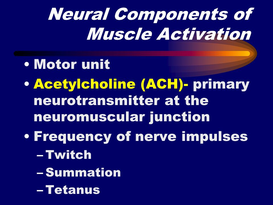 Neural Components of Muscle Activation
