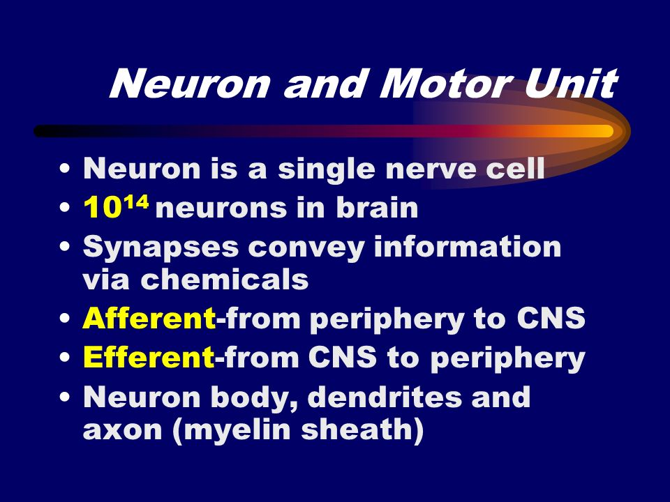 Neuron and Motor Unit Neuron is a single nerve cell