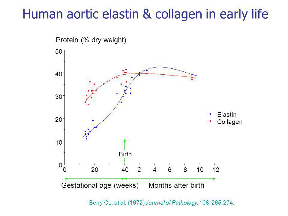 Human aortic elastin & collagen in early life