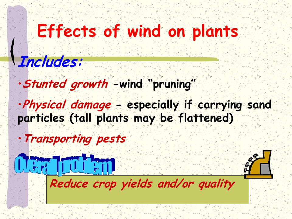 Effects of wind on plants