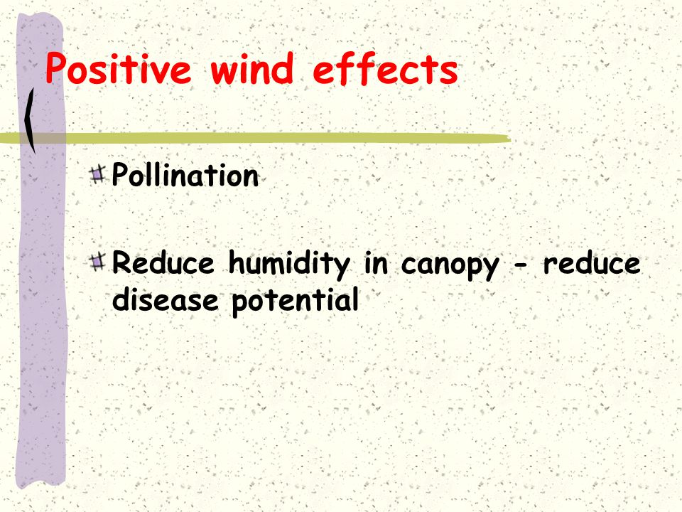 Positive wind effects Pollination