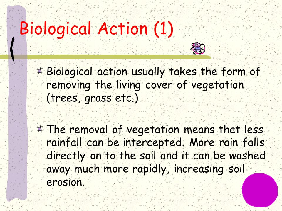 Biological Action (1) Biological action usually takes the form of removing the living cover of vegetation (trees, grass etc.)