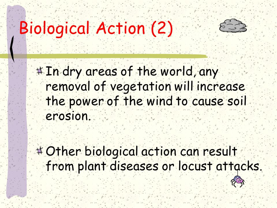 Biological Action (2) In dry areas of the world, any removal of vegetation will increase the power of the wind to cause soil erosion.