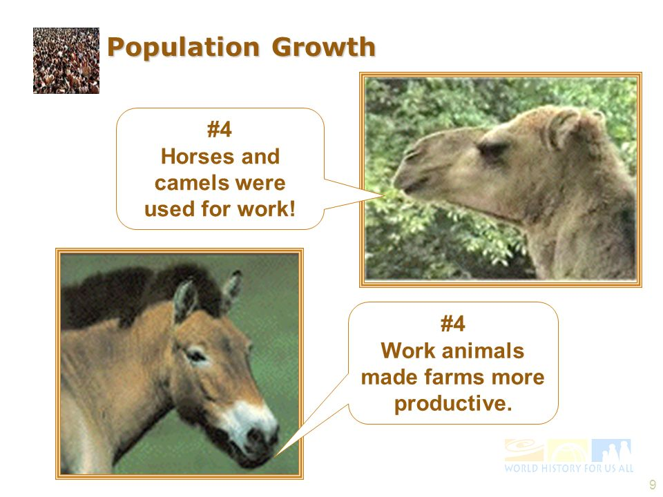 Population Growth #4 Horses and camels were used for work! #4