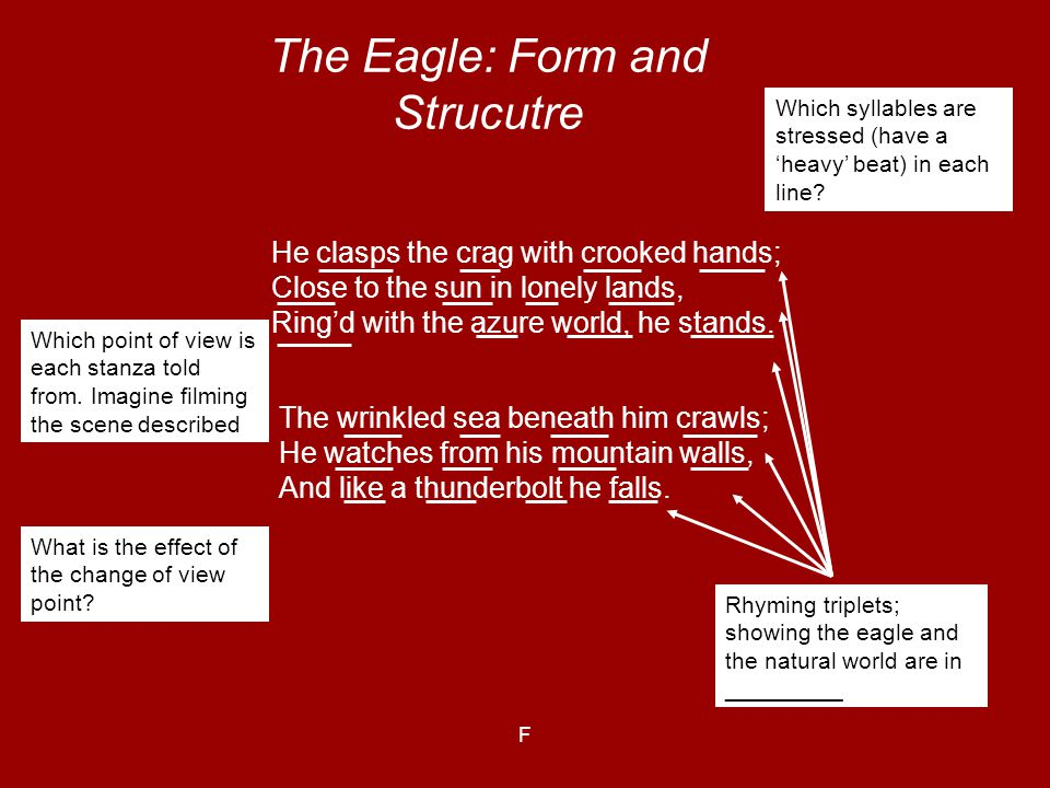 The Eagle: Form and Strucutre