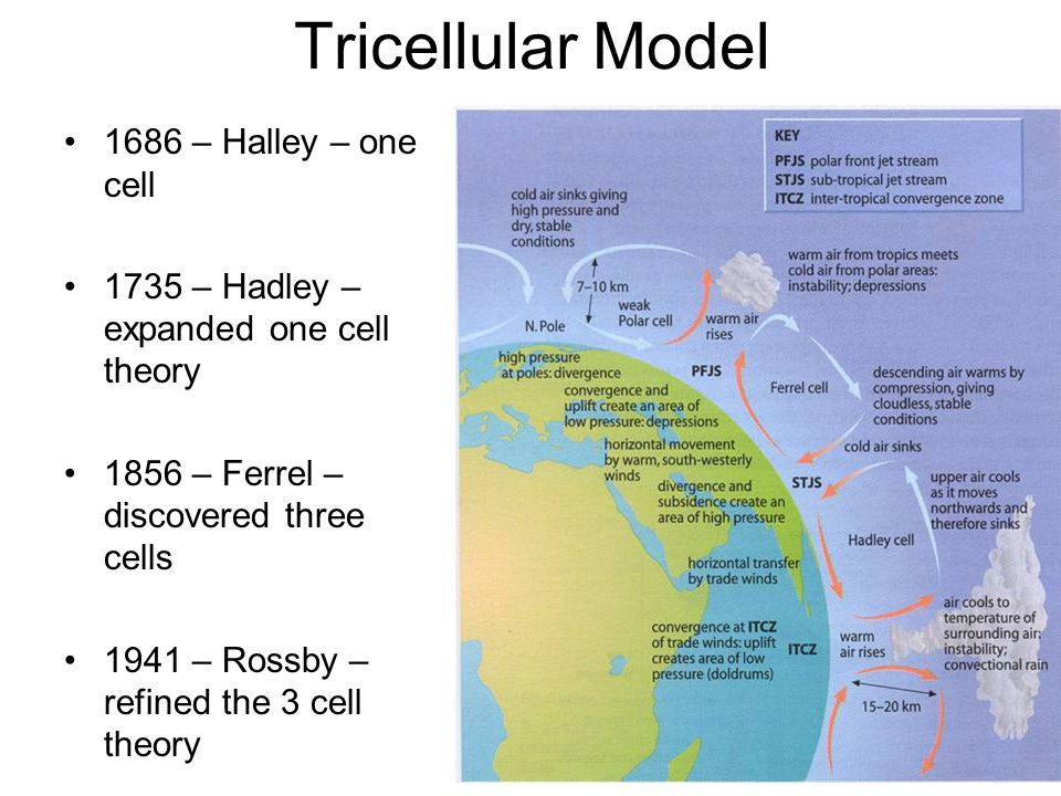 Tricellular Model 1686 – Halley – one cell