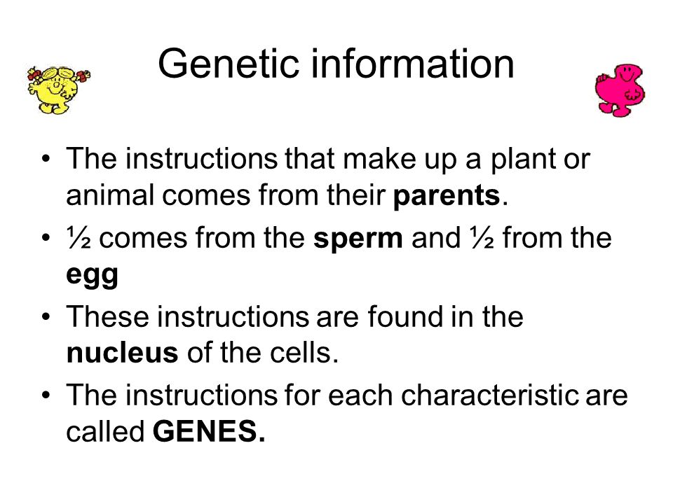 Genetic information The instructions that make up a plant or animal comes from their parents. ½ comes from the sperm and ½ from the egg.