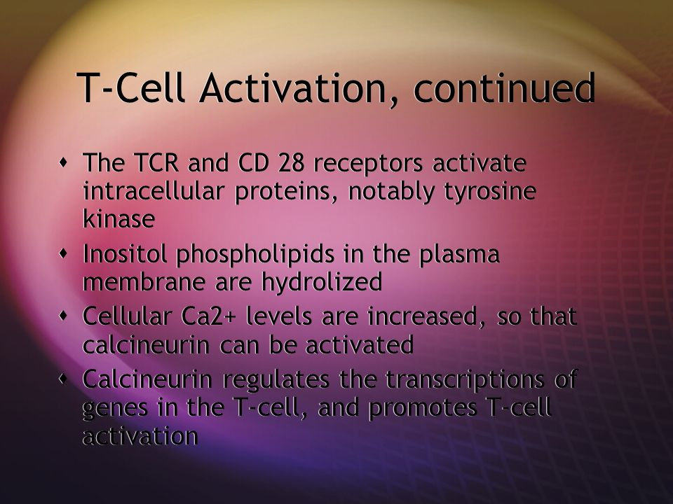 T-Cell Activation, continued