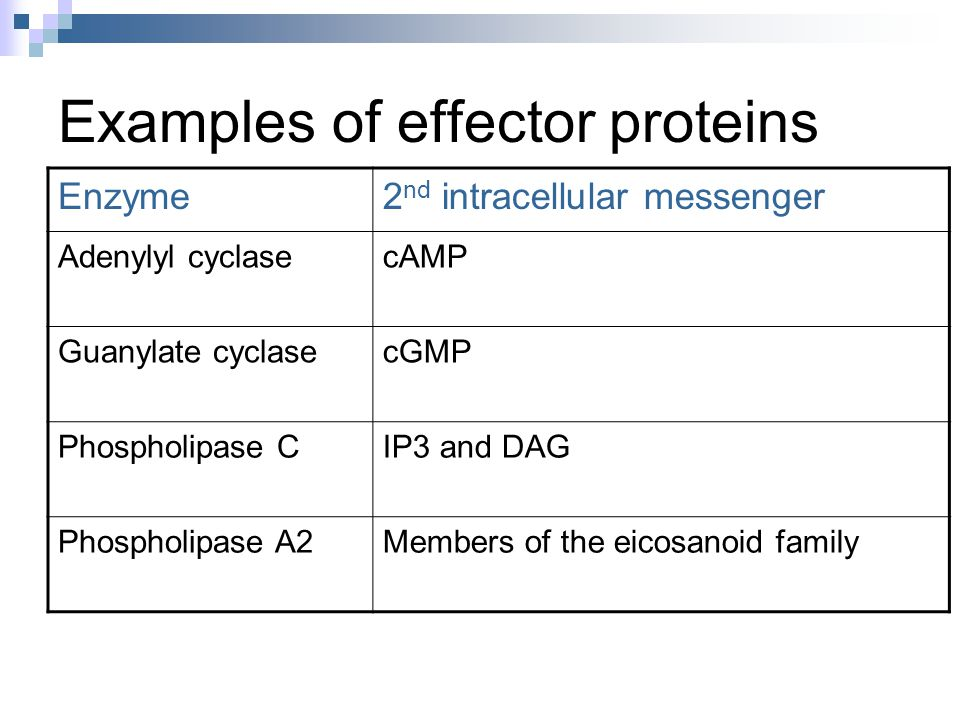 Examples of effector proteins