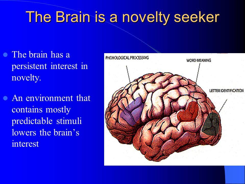 The Brain is a novelty seeker