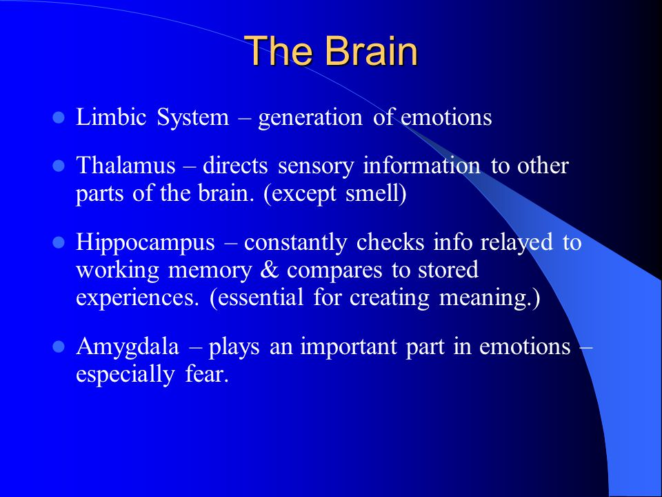 The Brain Limbic System – generation of emotions