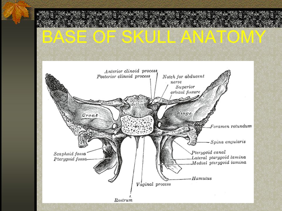 BASE OF SKULL ANATOMY