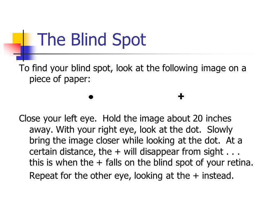 The Blind Spot To find your blind spot, look at the following image on a piece of paper: