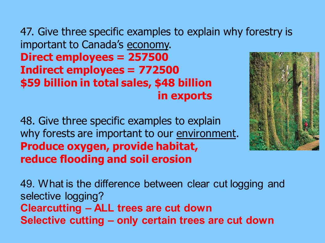 47. Give three specific examples to explain why forestry is important to Canada's economy.