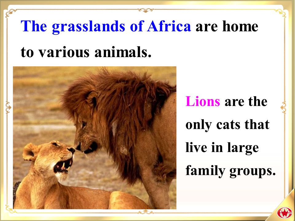 The grasslands of Africa are home to various animals.