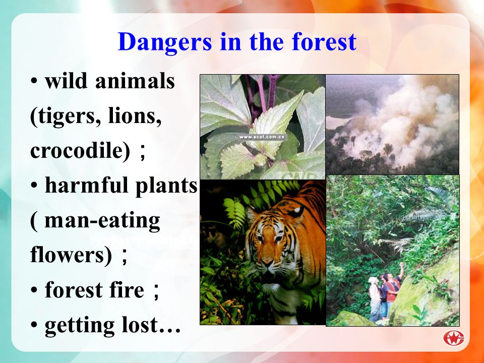 Dangers in the forest wild animals (tigers, lions, crocodile);