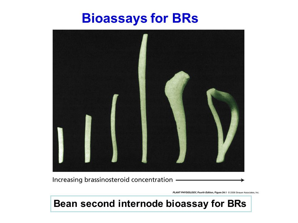 Bioassays for BRs Bean second internode bioassay for BRs