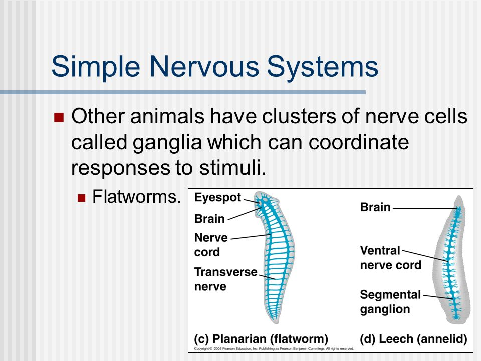 Simple Nervous Systems