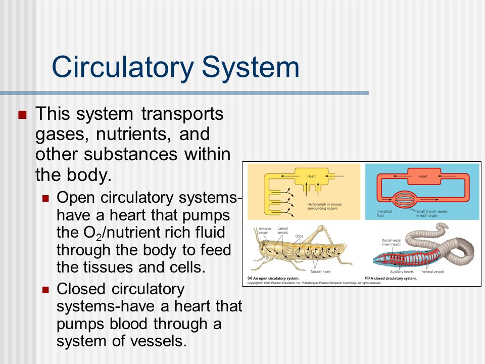 Circulatory System This system transports gases, nutrients, and other substances within the body.
