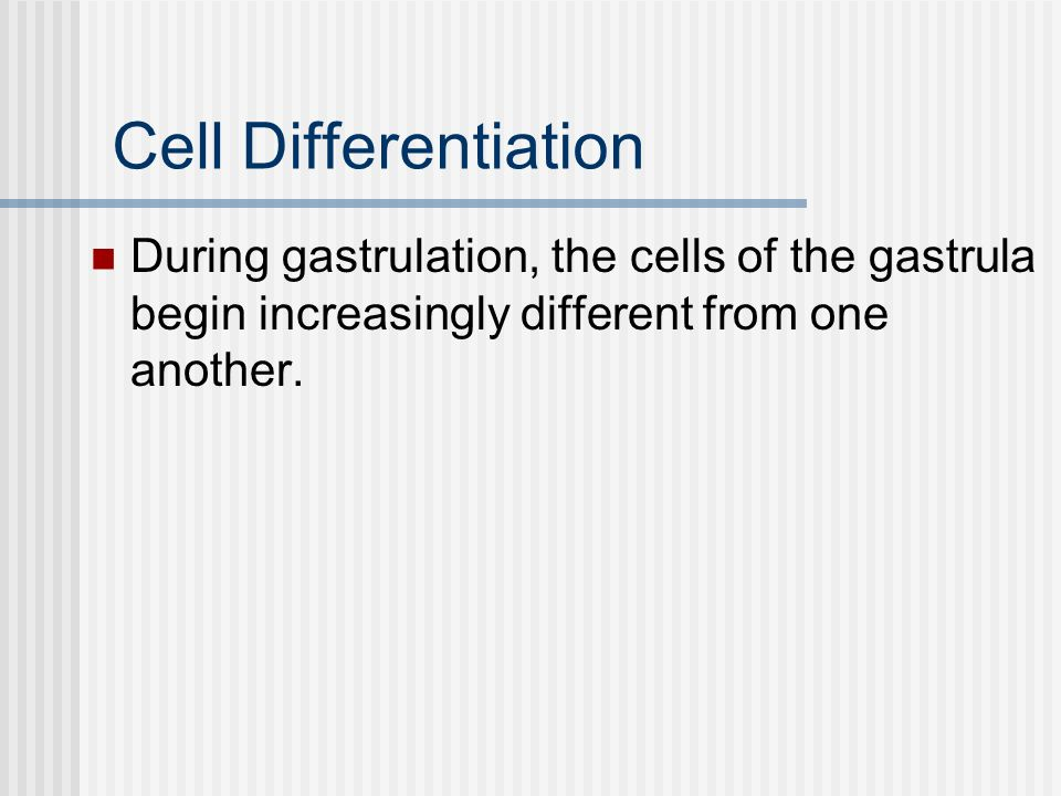 Cell Differentiation During gastrulation, the cells of the gastrula begin increasingly different from one another.