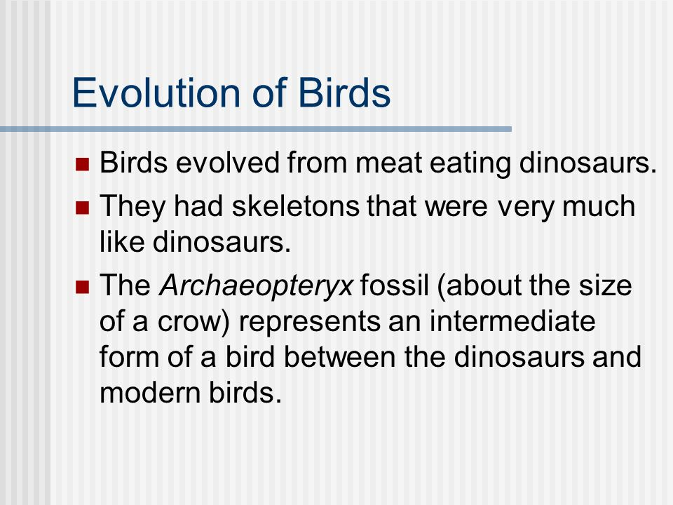 Evolution of Birds Birds evolved from meat eating dinosaurs.