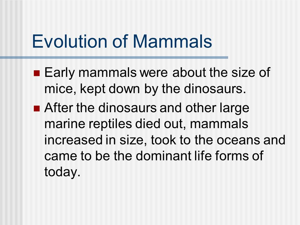 Evolution of Mammals Early mammals were about the size of mice, kept down by the dinosaurs.