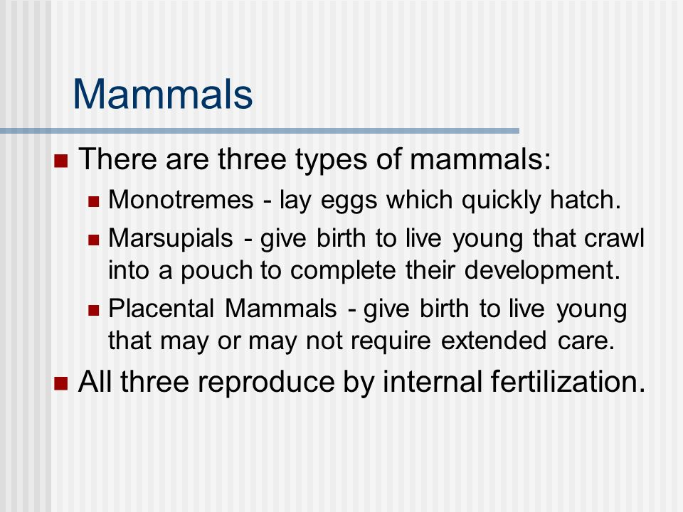 Mammals There are three types of mammals: