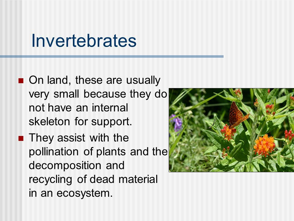 Invertebrates On land, these are usually very small because they do not have an internal skeleton for support.
