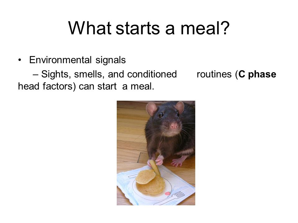 What starts a meal Environmental signals