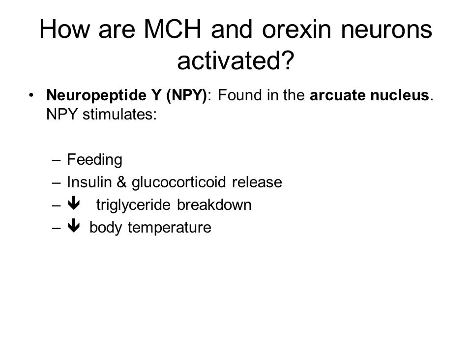 How are MCH and orexin neurons activated