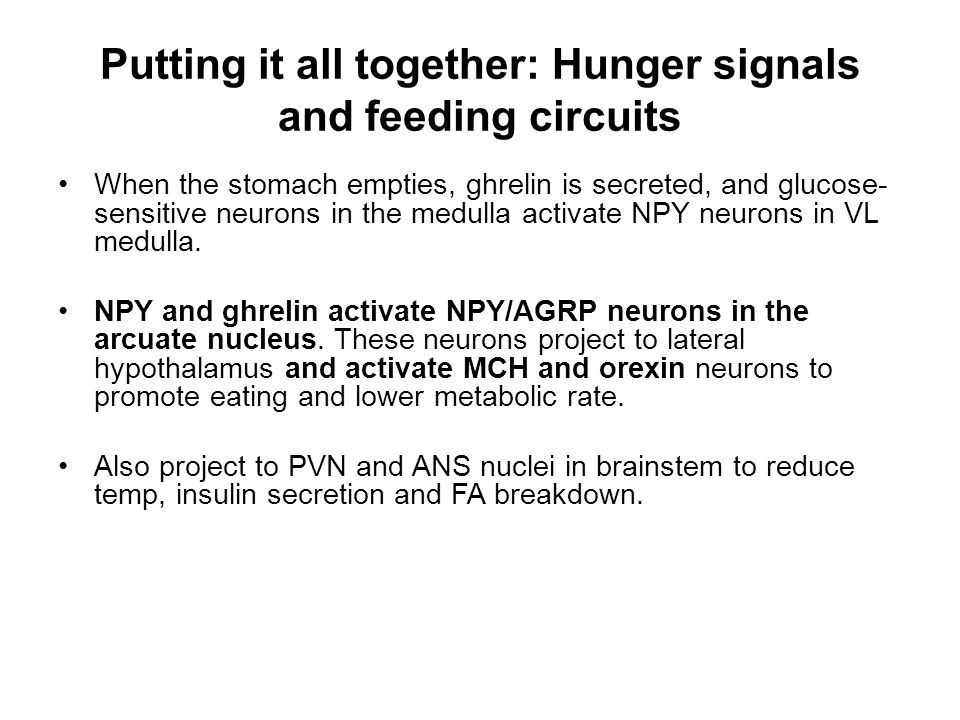 Putting it all together: Hunger signals and feeding circuits