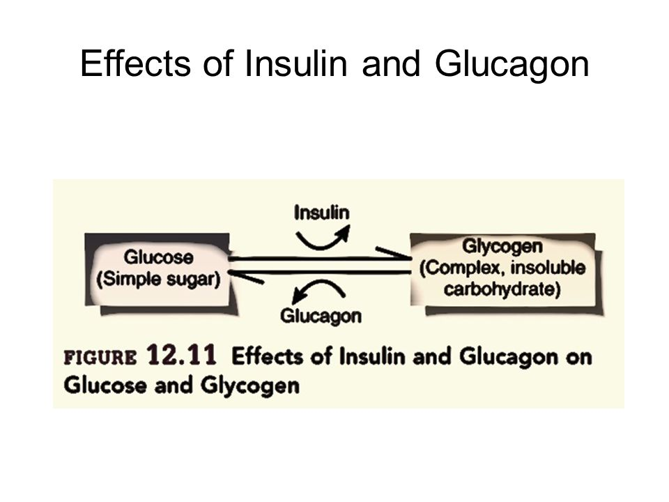 Effects of Insulin and Glucagon