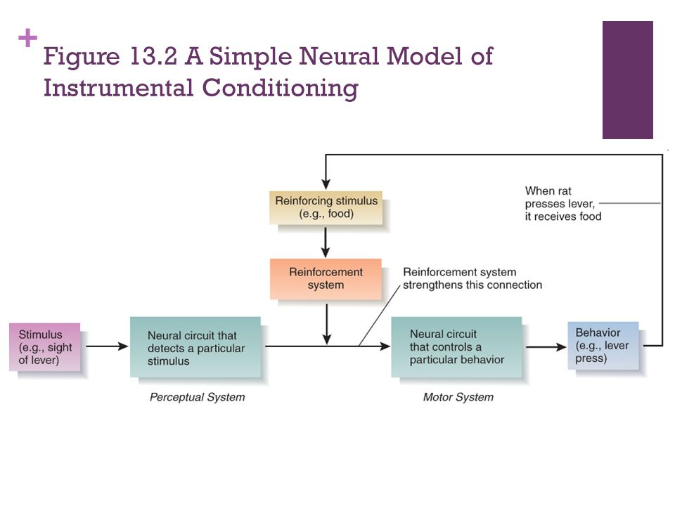 Figure 13.2 A Simple Neural Model of Instrumental Conditioning