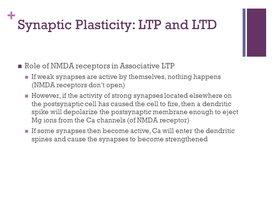 Synaptic Plasticity: LTP and LTD