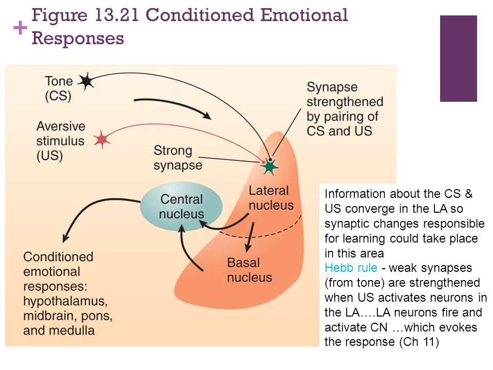 Figure 13.21 Conditioned Emotional Responses