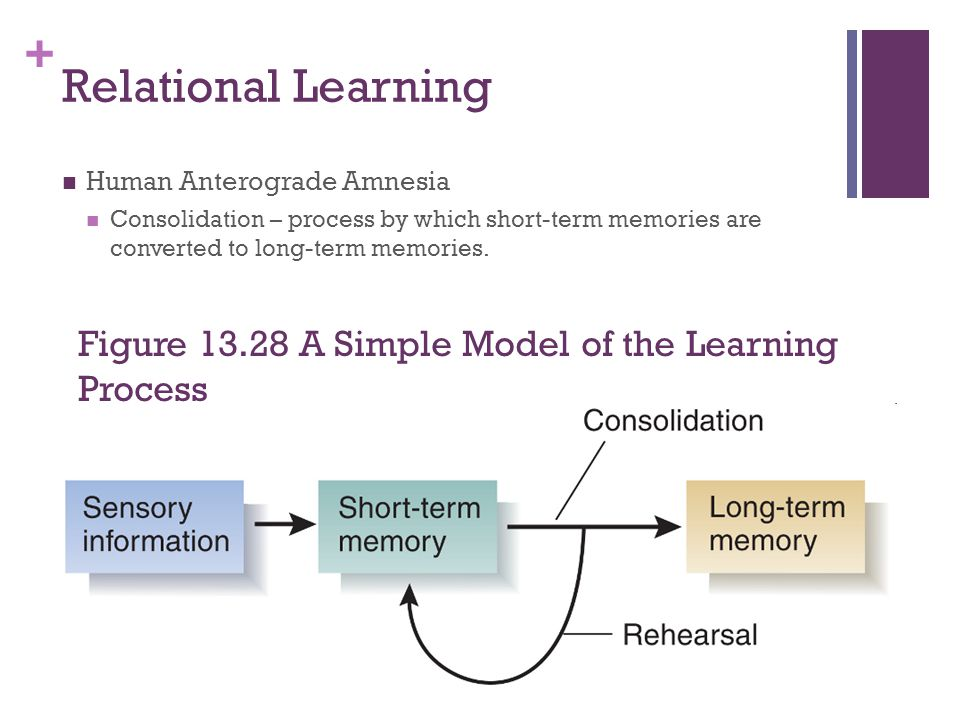 Relational Learning Human Anterograde Amnesia. Consolidation – process by which short-term memories are converted to long-term memories.