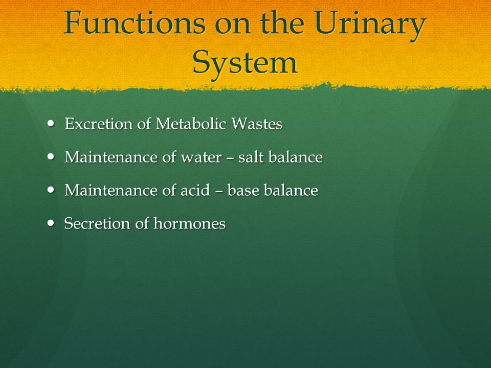 Functions on the Urinary System