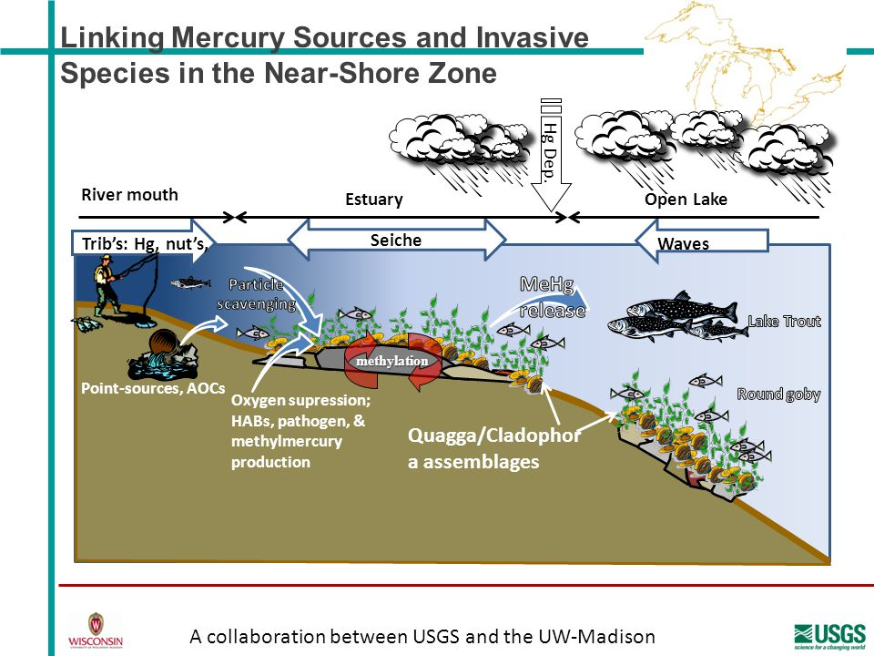Linking Mercury Sources and Invasive Species in the Near-Shore Zone