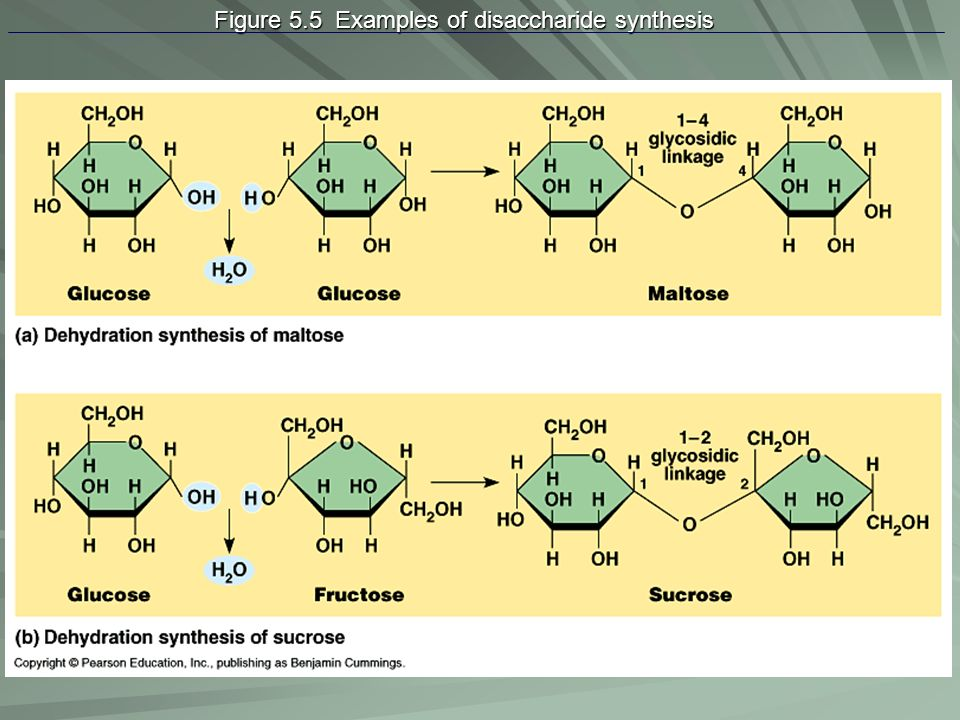 Figure 5.5 Examples of disaccharide synthesis