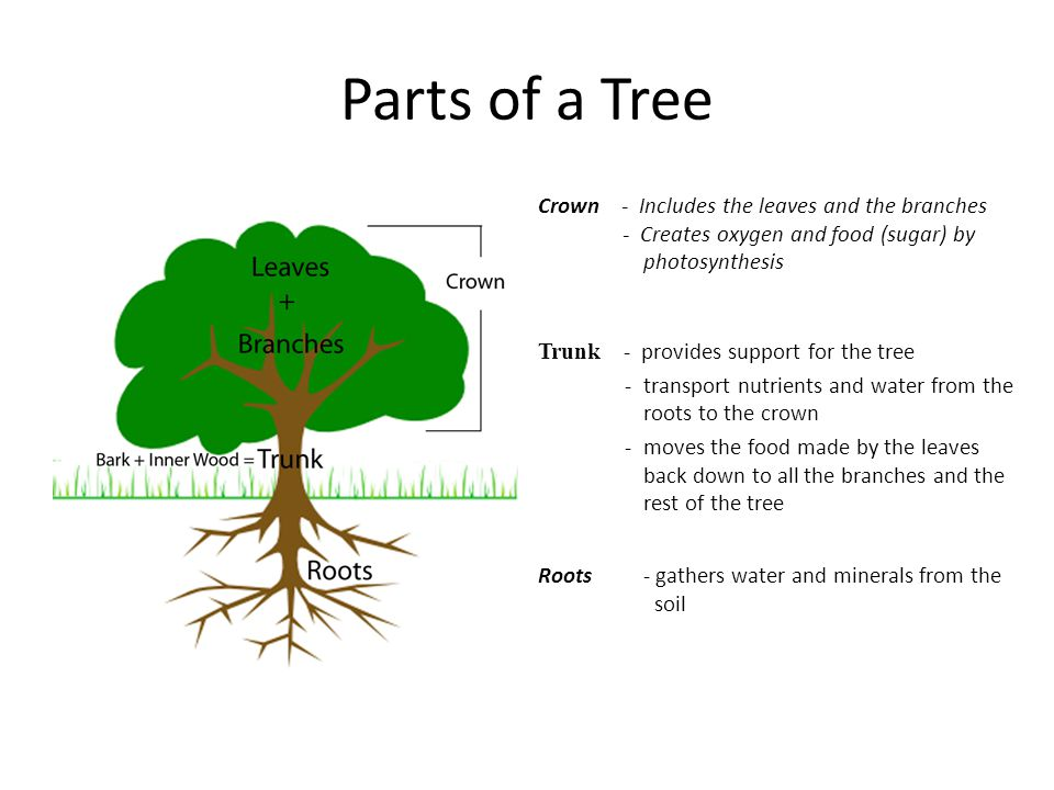 Characteristics Of Wood And Squaring Stock Ppt Video