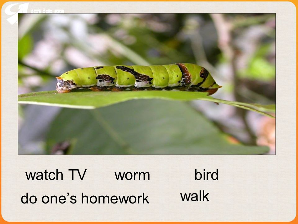 watch TV worm bird walk do one's homework
