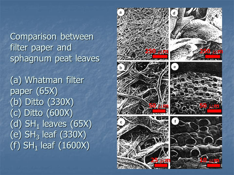Comparison between filter paper and sphagnum peat leaves (a) Whatman filter paper (65X) (b) Ditto (330X) (c) Ditto (600X) (d) SH1 leaves (65X) (e) SH3 leaf (330X) (f) SH1 leaf (1600X)