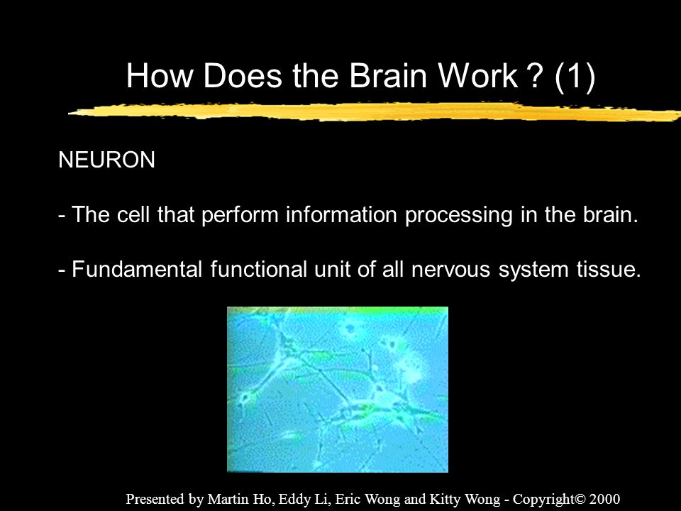 How Does the Brain Work (1)